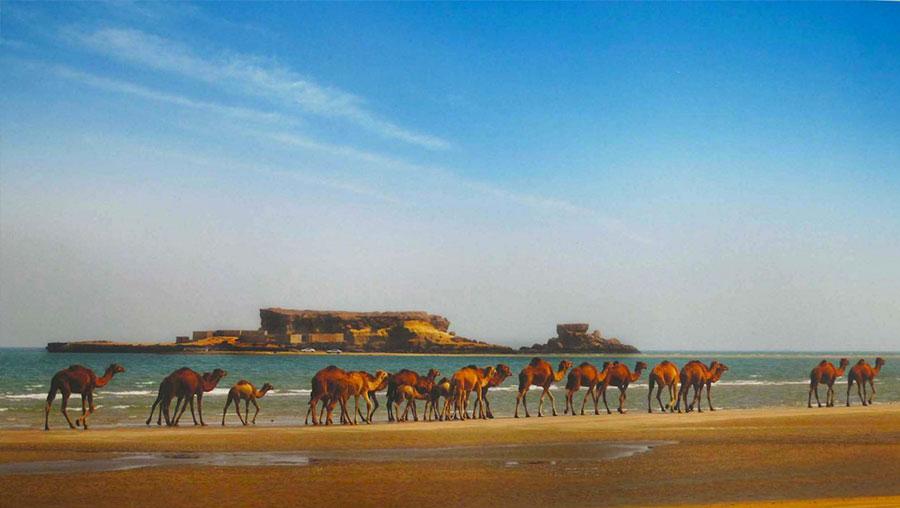 شترسواری در جزیره ناز